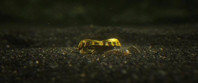 Hybrids - Still Frame from Hybrids Short Film