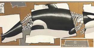 Alessio Bolognesi - Orca (L'evoluzione mi fa specie)