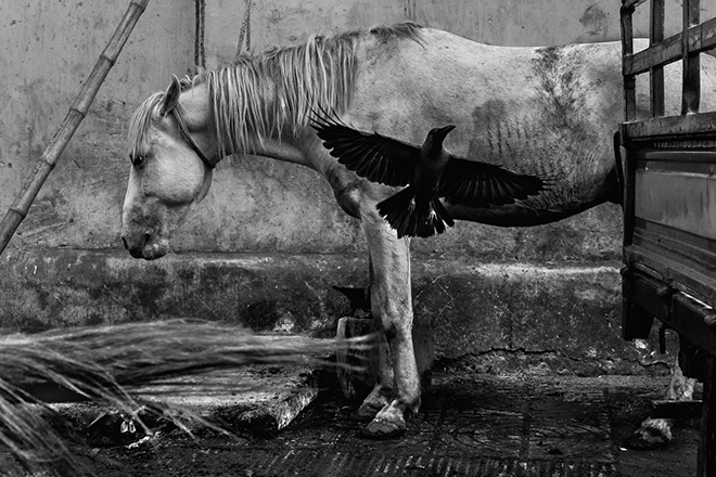 Md Enamul Kabir (Bangladesh) - Untitled, Urban Animals Category, URBAN 2018 Photo Awards