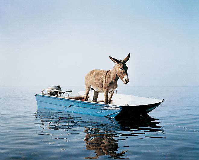 Paola Pivi, Untitled (donkey), 2003. Stampa a getto d'inchiostro su PVC, 1020 x 1230 cm. Foto: Hugo Glendinning, Courtesy Massimo De Carlo, Milan/London/Hong Kong.