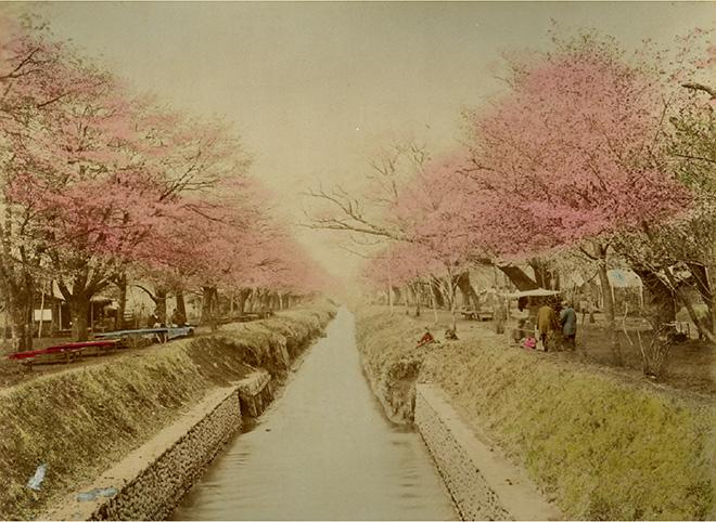 Scena primaverile a Koganei, Tokyo. Fotografia all'albumina. Periodo Meiji (1868 - 1912)