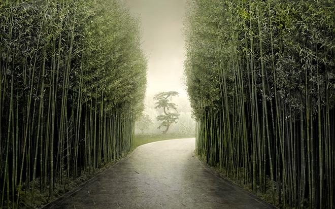Irene Kung, Bamboo Alley 76x152cm, 2018. Courtesy: Galleria Valentina Bonomo.