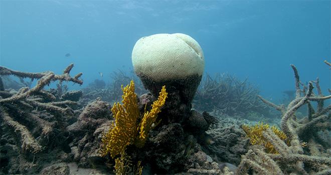 ANTROPOCENE - L'epoca umana. Film Still - Coral