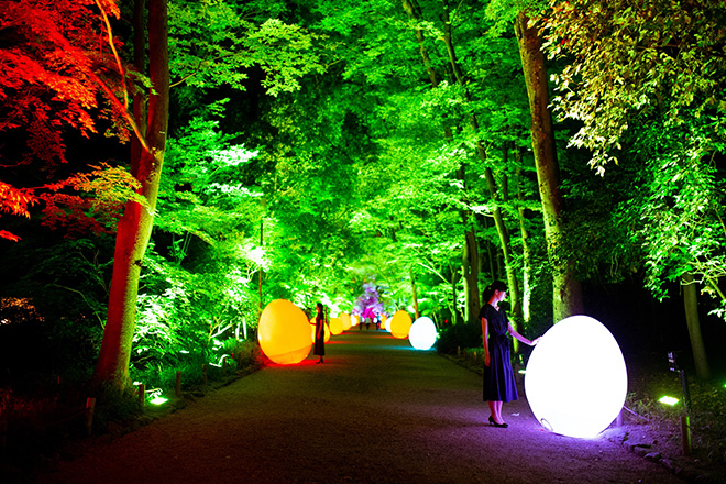 Resisting and Resonating Ovoids and Forest – Forest of Tadasu at Shimogamo Shrine teamLab, 2018