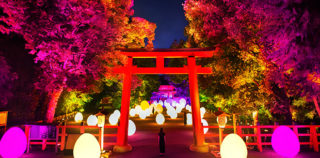 teamLab – Digitized Forest at the World Heritage Site of Shimogamo Shrine, Kyoto Art