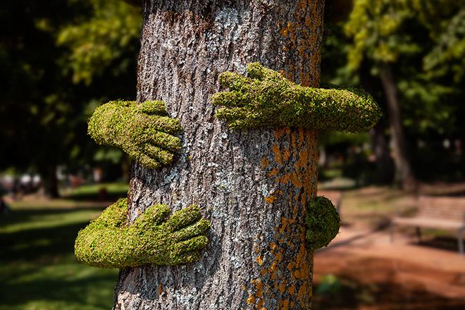 Monsieur Plant - TREE HUG, Annecy, 2019
