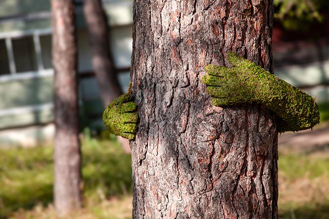 Monsieur Plant – TREE HUG