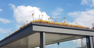 Utrecht: le fermate degli autobus diventano ecosistemi urbani per le api