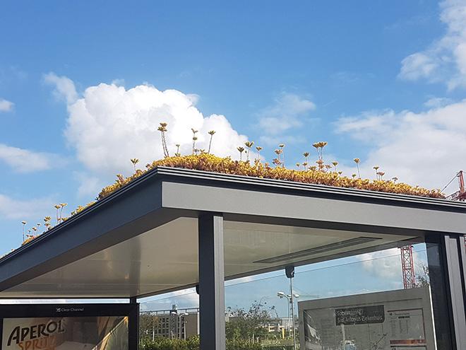 Utrecht: ecosistemi urbani per api alla fermata del bus