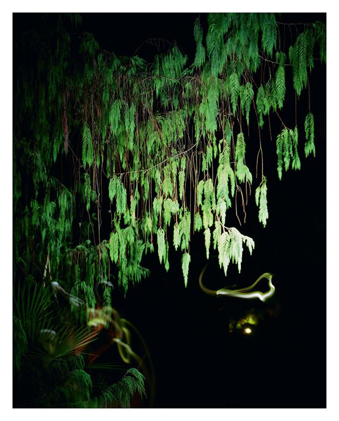 Alizia Lottero - Gardens Memos #04, 2012. stampa Fine Art Giclée. 63,5 x 50 cm, edizione di 7 esemplari + 2 AP. Alizia Lotero - Gardens Memos. SI FEST - SEDUZIONI Fascinazione e mistero.