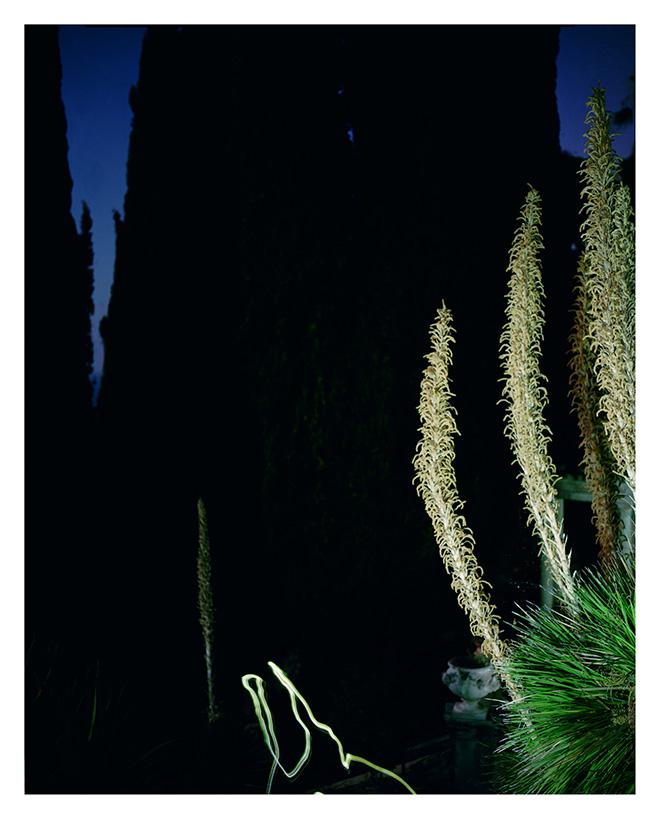 Alizia Lottero - Gardens Memos #06, 2012. stampa Fine Art Giclée. 63,5 x 50 cm, edizione di 7 esemplari + 2 AP. Alizia Lotero - Gardens Memos. SI FEST - SEDUZIONI Fascinazione e mistero.