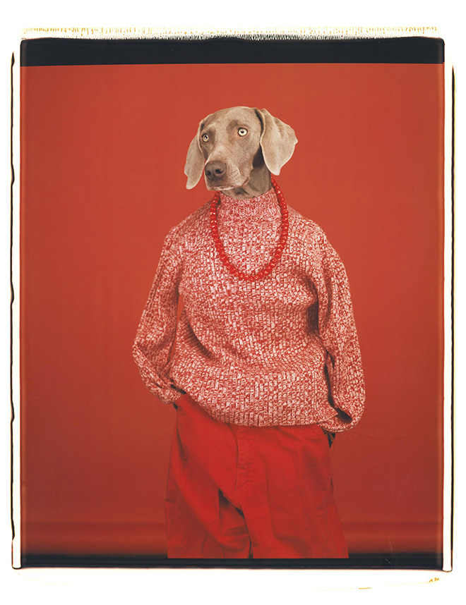 William Wegman - Casual, 2002. Polaroid a colori. Proprietà dell'artista © William Wegman