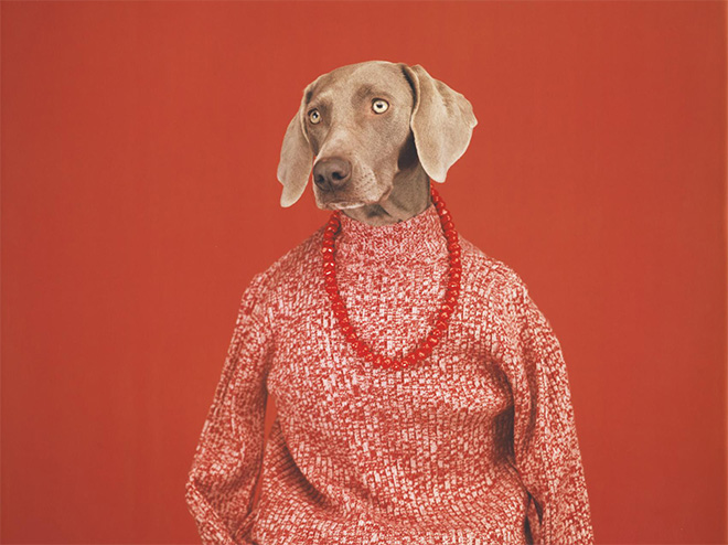 William Wegman – Being Human