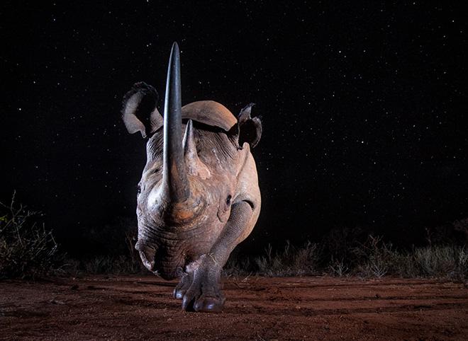 William Burrard-Lucas - Black Rhino at Night, savo West (Kenya), Wildlife, Siena International Photo Awards 2019
