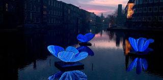 Masamichi Shimada – Butterfly Effect