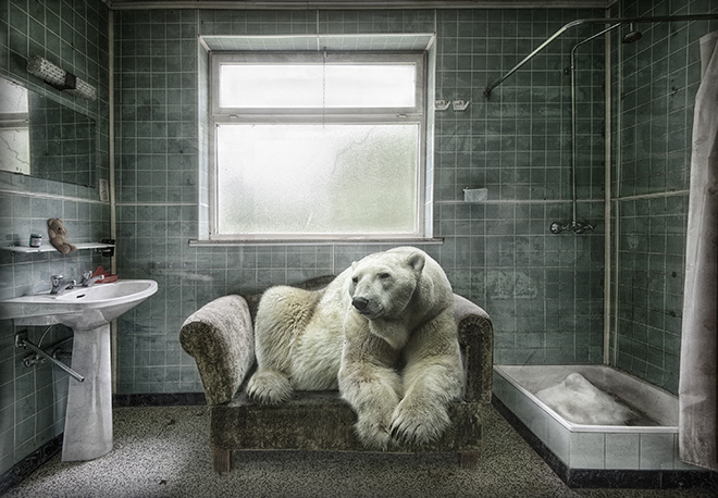© Marcel van Balken - Netherlands, Polarbearpet, Particular Merit Mention, All About Photo Awards 2020