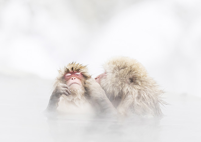 © Kosuke Kitajima, Japan - A monkey entering a Japanese hot spring. Had various expressions like a person. Particular Merit Mention, All About Photo Awards 2020