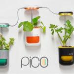 PICO – Il giardino in palmo di mano