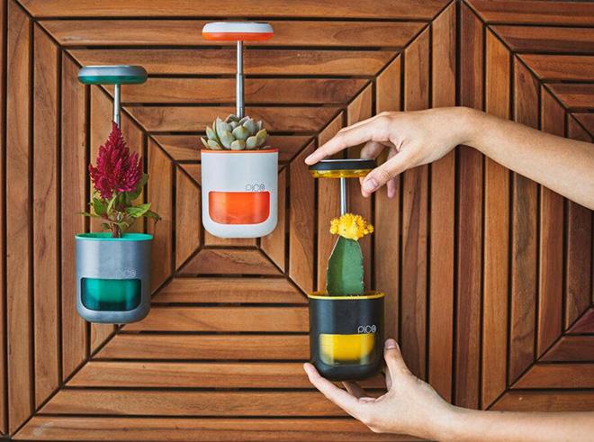 PICO - Il giardino in palmo di mano