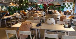 Zoo Aizu shaboten di Shizuoka - Peluche di Capibara seduti ai tavoli per favorire il distanziamento sociale. photo by twitter user@chacha0rca