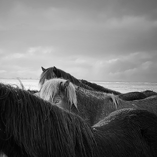 Xiaojun Zhang, China - Horses in the storm, Location: Iceland. Shot on iPhone X. First place - Animals. © IPPAWARDS - 2020 Winners