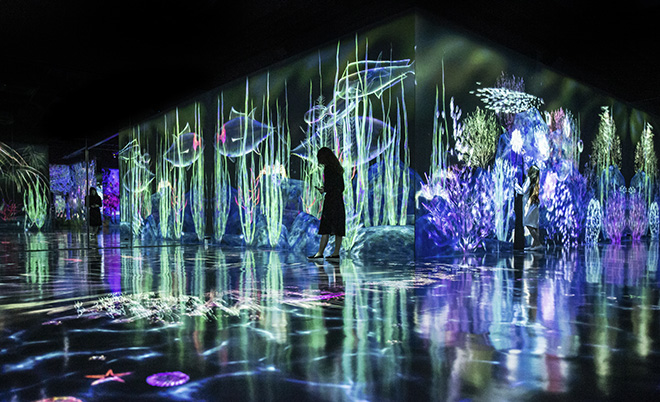 teamLab Forest - Catching and Collecting Forest, Fukuoka, Japan