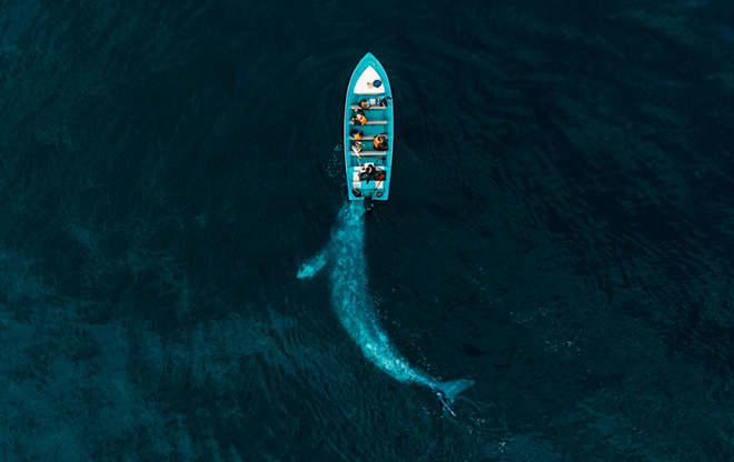 Joseph Cheiresn | Gray Whale Plays Pushing Tourists, Drone Photo Awards 2020 - Primo classificato Nature category