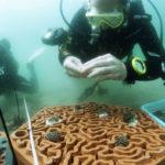 La nuova vita delle barriere coralline con la Stampa 3D