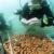 La nuova vita delle barriere coralline con la Stampa 3D. photo credit: Christian J. Lange/HKU