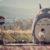 Totoro - L'idea creativa di due nonni giapponesi