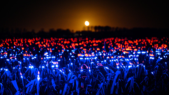 Daan Roosegaarde - GROW by Roosegaarde highlights the beauty of agriculture