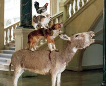 Maurizio Cattelan - Love Saves Life, 1995, Asino, cane, gatto, gallo in tassidermia, 190 x 120 x 60 cm. Veduta dell'installazione, Skulptur Projekte, Westfälisches Landesmuseum, Münster, 1997 Courtesy Archivio Maurizio Cattelan. Foto Roman Mensing.