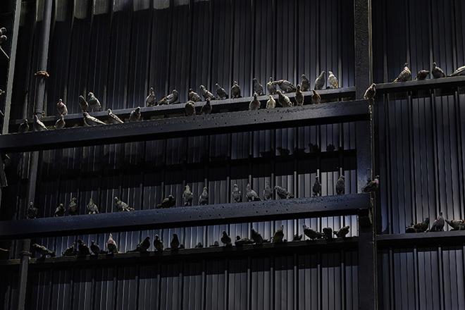 Maurizio Cattelan - Ghosts, 2021. Veduta dell'installazione, Pirelli HangarBicocca, Milano, 2021. Piccioni in tassidermia, Dimensioni ambientali. Courtesy l'artista e Pirelli HangarBicocca, Milano. Foto: Agostino Osio.
