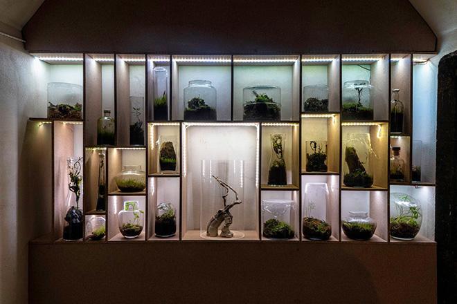 Angela Pellicanò, Sciafilia, 2021, installazione site-specific, Wardian cases, dimensioni ambientali veduta di Station to Station, Bunker di Reggio Calabria Centrale