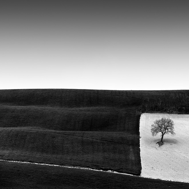 Rosario Civello - Tree in a Square, First place Landscape category, Minimalist Photography Awards
