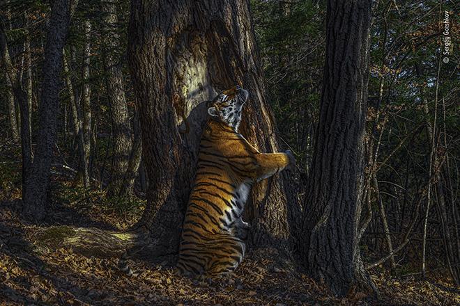 56° Wildlife Photographer of The Year – I Vincitori e la mostra a Milano